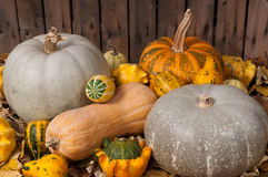Pumpkins in the autumn Stock Photo