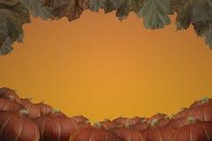 Pumpkins autumn background Stock Photos