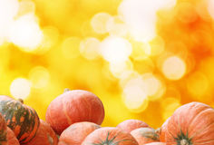 Pumpkins on autumn  bokeh background with space for your text Stock Photos