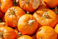 Pumpkins in autumn Royalty Free Stock Photos