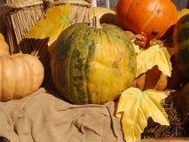Pumpkins. At the autumn fair Stock Photography