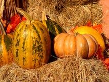 Pumpkins. At the autumn fair Stock Images
