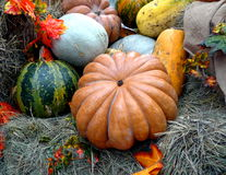 Pumpkins. At the autumn fair Royalty Free Stock Photo