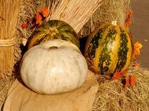 Pumpkins. At the autumn fair Stock Image