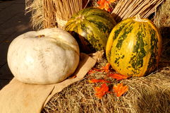 Pumpkins. At the autumn fair Royalty Free Stock Image