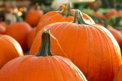 Pumpkins in Autumn. Pumpkins at a farmers market in Autumn Stock Photography