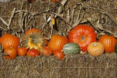 Pumpkins in autumn, Germany Royalty Free Stock Image