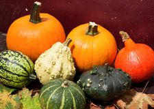 Pumpkins  / Autumn and Helloween concept. View of the Pumpkins  / Autumn and Helloween concept Stock Images