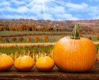 Pumpkins before autumn landscape Stock Images