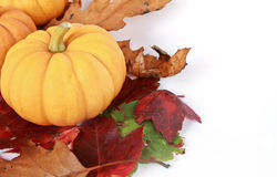 Pumpkins on autumn leaves. And white background Royalty Free Stock Image