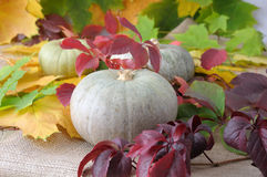 Pumpkins of autumn leaves Stock Images