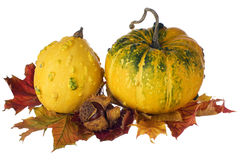 Pumpkins on autumn leaves Royalty Free Stock Photo