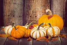 Pumpkins and autumn leaves against rustic wooden background Royalty Free Stock Image