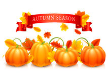 Pumpkins and Autumn Leaves royalty free illustration