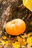 Pumpkins and autumn leaves Stock Image