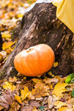 Pumpkins and autumn leaves Stock Photos
