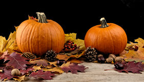 Pumpkins with autumn leaves for thanksgiving day on black backgr royalty free stock photography