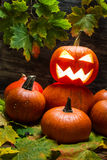 Pumpkins with autumn leaves Royalty Free Stock Photo