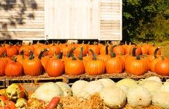 Pumpkins on the autumn market Royalty Free Stock Image