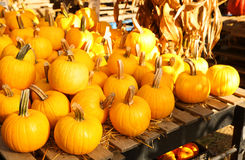 Pumpkins on the autumn market Royalty Free Stock Images