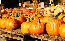 Pumpkins on the autumn market Royalty Free Stock Image
