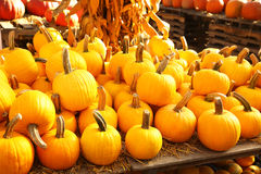 Pumpkins on the autumn market Royalty Free Stock Photos