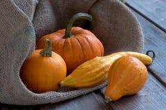 Pumpkins autumn