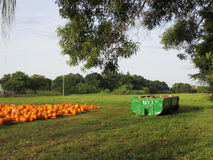 Pumpkins awaiting fate. Halloween quickly approaching, Pumpkins for sale or past their prime Royalty Free Stock Photography