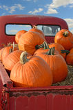 Pumpkins of Back of Pickup Truck Royalty Free Stock Photos