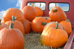 Pumpkins on Back of Pickup Truck Stock Images