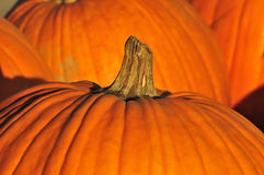 Pumpkins background stock photo