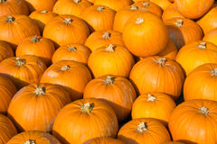 Pumpkins background royalty free stock images