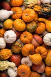 Pumpkins background Royalty Free Stock Photo