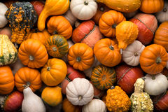 Pumpkins background Stock Photography