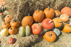 Pumpkins on a bale of straw Stock Image
