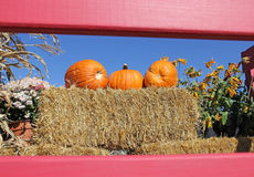 Pumpkins on Bale of Straw Hay Red Frame Royalty Free Stock Images