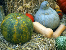 Pumpkins on bales Stock Images