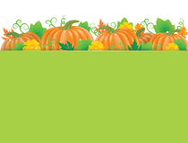 Pumpkins banner Stock Images