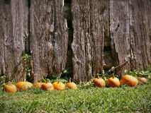 Pumpkins And Barn Background stock images
