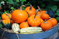 Pumpkins on barrel stock images