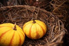 Pumpkins in a basket Stock Images
