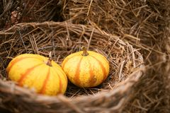 Pumpkins in a basket Royalty Free Stock Images