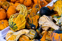 Pumpkins in a basket Stock Photos