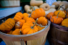 Pumpkins in a basket Stock Photography