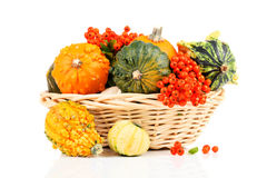 Pumpkins in basket Stock Photo