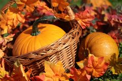 Pumpkins. In basket and colorful autumn leaves stock image