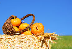 Pumpkins in Basket with Ears of Wheat on Straw Bale Stock Photo