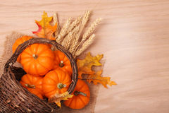 Pumpkins with Basket and Ears of Wheat on table Stock Images