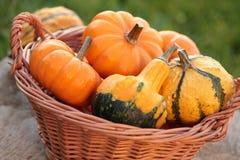 Pumpkins. In basket in the garden stock image