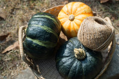 Pumpkins in the basket Royalty Free Stock Photo